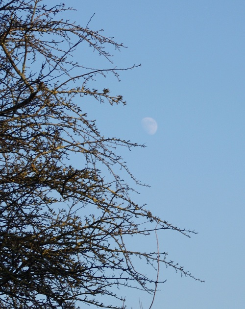 The Moon Over Knaresborough